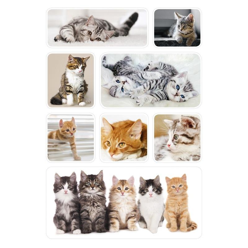 72x Poezen/katten/kittens dieren stickers